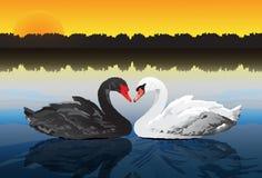 Paarschwan am ruhigen See Stockbilder