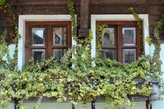 Paart das hölzerne Fenster, das durch Anlagen verziert wird Stockfotos