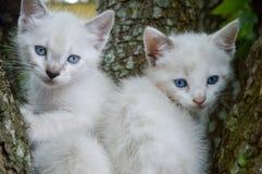Paart Katzen Lizenzfreies Stockbild
