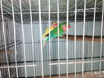 Paarvogel stockfotografie