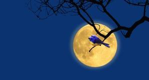 Paarvogels en romantische volle maan bij nacht stock illustratie