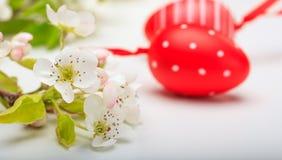 Paaseieren en bloemen op witte achtergrond Stock Foto
