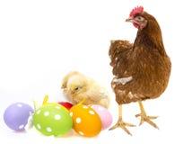 Paaseieren en kippen met een kip Royalty-vrije Stock Fotografie