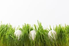 Paaseieren in gras Stock Fotografie