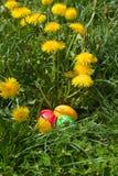 Paaseieren in het groene gras Stock Afbeeldingen