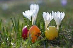Paaseieren met krokus in de lente Stock Afbeelding