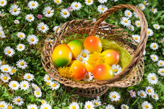 Paaseierenmand met Witte Daisy Flowers Stock Fotografie