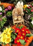 Paashaas die kleurrijke sleutelbloemen bekijken Royalty-vrije Stock Fotografie