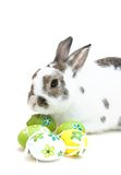 Paashaas met eieren Royalty-vrije Stock Foto