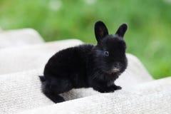Paashaasconcept Klein leuk konijn, pluizig zwart huisdier zachte nadruk, ondiepe diepte van de ruimte van het gebiedsexemplaar Royalty-vrije Stock Foto's