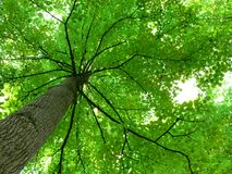 Pabellón de árbol Fotografía de archivo libre de regalías