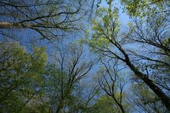Pabellón de bosque temprano del resorte Imagen de archivo libre de regalías