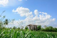 Pabellón de madera que rodea por el campo de arroz Imagen de archivo