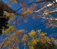 Pabellón del otoño Imagenes de archivo