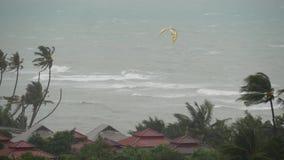 Pabuk台风,海洋海岸,泰国 自然灾害,eyewall飓风 强的极端旋风风摇动棕榈 股票视频