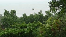 Pabuk台风,海洋海岸,泰国 自然灾害,eyewall飓风 强的极端旋风风摇动棕榈 股票录像