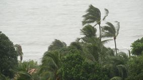 Pabuk-Taifun, Ozeanseeufer, Thailand Naturkatastrophe, eyewall Hurrikan Starke extreme Wirbelsturmwind-Einflusspalme stock footage