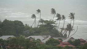 Pabuk typhoon, ocean sea shore, Thailand. Natural disaster, eyewall hurricane. Strong extreme cyclone wind sways palm
