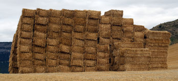 Pacas of straw of cereal. Stock Image