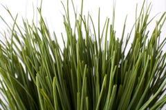 Pacchetti della erba cipollina Immagine Stock
