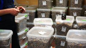 Pacchetti e guarnizioni del magazziniere un la serie di ambra per l'esportazione stock footage