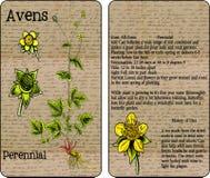 Pacchetto d'annata del seme del Avens royalty illustrazione gratis