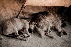 Pacchetto dei cani esterni Immagini Stock