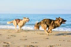 Pacchetto dei cani esterni immagine stock