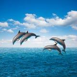 Pacchetto dei delfini di salto Fotografia Stock