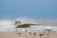 Pacchetto dei gabbiani sulla spiaggia Immagini Stock