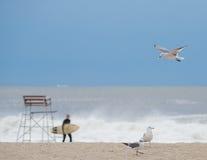 Pacchetto dei gabbiani sulla spiaggia Immagine Stock