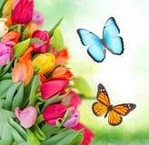 Pacchetto dei tulipani della sorgente Fotografia Stock Libera da Diritti