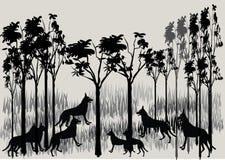 Pacchetto del dingo Fotografia Stock Libera da Diritti