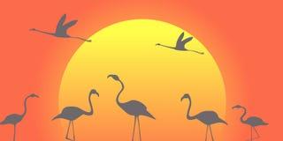 Pacchetto del fenicottero contro lo sfondo di grande sole di seduta-giù Illustrazione Vettoriale