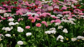 Pacchetto della compilazione dei fiori della primavera video d archivio