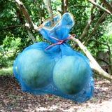 Pacchetto della frutta del pomelo Fotografia Stock Libera da Diritti
