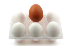 Pacchetto delle uova bianche e di un uovo marrone Immagine Stock