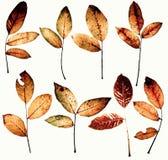 Pacchetto di disegno di autunno Fotografie Stock Libere da Diritti