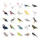 Pacchetto piano delle icone di vettore degli uccelli illustrazione vettoriale