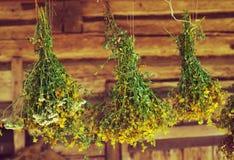 Pacchi delle piante medicinali St John & x27; il mosto di malto di s è raccolto per l'essiccamento dell'attaccatura immagine stock