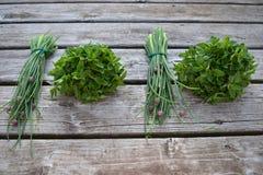 Pacchi, erba cipollina ed origano dell'erba Immagini Stock