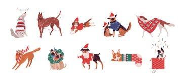Pacco dei cani svegli delle razze differenti vestite nei costumi di Natale o nel gioco con le decorazioni di festa Insieme di royalty illustrazione gratis