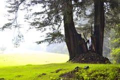Pace boscosa fotografia stock libera da diritti