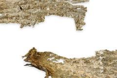 Pace della corteccia di legno isolata su bianco. Immagini Stock Libere da Diritti