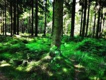 Pace della foresta fotografia stock