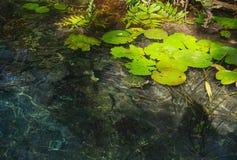 Pace della natura con luce solare ed ombre Fotografia Stock