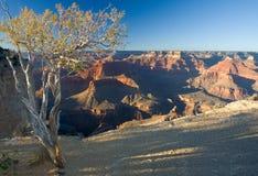 A pace in grande canyon Fotografie Stock Libere da Diritti