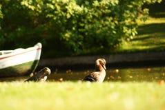 Pace interna fotografie stock libere da diritti