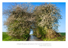 Flowering spring path with lyrics Royalty Free Stock Photography