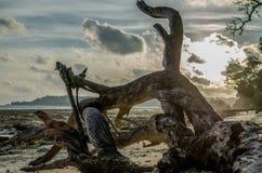 Pace rotta di legno o dell'albero caduto su una spiaggia Immagini Stock Libere da Diritti
